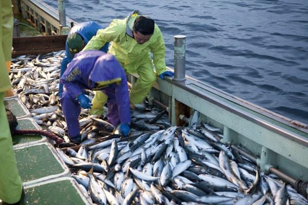漁業している様子